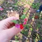Wspomnienia z wiosennego spaceru